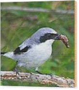 Loggerhead Shrike With Pray Wood Print