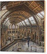 London Natural History Museum Wood Print