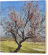 Lone Almond Tree In Bloom Wood Print