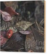 Lone Berry Wood Print