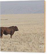 Lone Bull In Grassy Field Wood Print