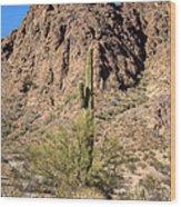 Lone Cactus  Wood Print