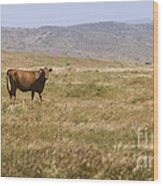 Lone Cow In Grassy Field Wood Print