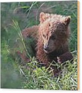 Lone Cub Wood Print