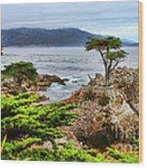 Lone Cypress By Diana Sainz Wood Print