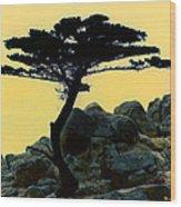 Lone Cypress Companion Wood Print