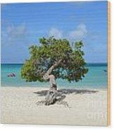 Lone Divi Tree In Aruba Wood Print
