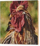 Lone Farm Rooster Portrait Wood Print