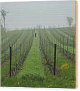 Lone Figure In Vineyard In The Rain On The Mission Peninsula Michigan Wood Print