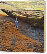 Lone Gull Wood Print