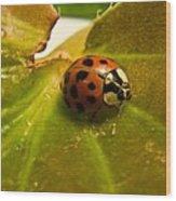Lone Lady Bird Beetle Wood Print