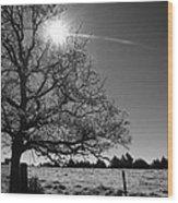 Lone Live Oak Bw Wood Print