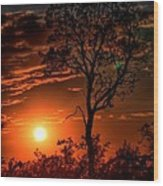 Lone Manzanita Sunset Wood Print