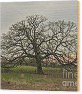Lone Oak - Spring Wood Print