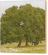 Lone Oaks Wood Print