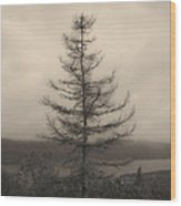 Lone Pine And The Bras D'or Wood Print