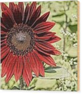 Lone Red Sunflower Wood Print