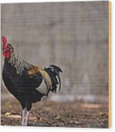 Lone Rooster Wood Print