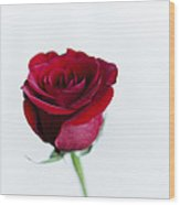 Lone Rose Wood Print