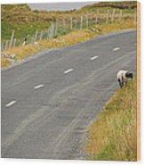 Lone Sheep Wood Print