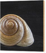Lone Shell Wood Print