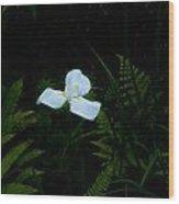 Lone Special Iris Wood Print