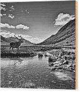 Lone Stag Wood Print