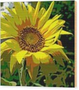 Lone Sunflower Wood Print