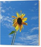 Lone Sunflower In A Summer Blue Sky Wood Print