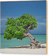 Lone Tree - Aruba Wood Print