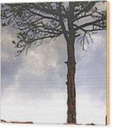 Lone Tree 11351 Wood Print