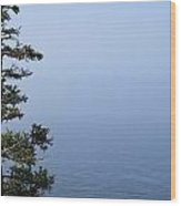Lone Tree By The Water In Acadia National Park Wood Print