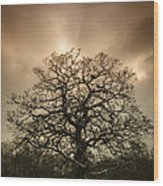 Lone Tree Wood Print by Amanda Elwell