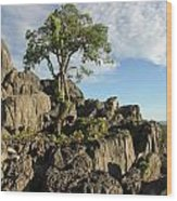 Lone Tree Wood Print by Gordon  Grimwade