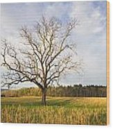Lone Tree In Cades Cove Wood Print