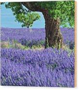 Lone Tree In Lavender Wood Print