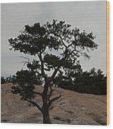 Lone Tree In Stone Mountain State Park North Carolina Wood Print