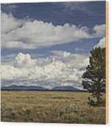 Lone Tree In The Grand Teton National Park Wood Print