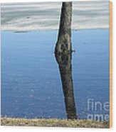 Lone Tree In Water Wood Print