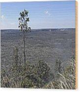 Lone Tree Kilauea Crater Wood Print