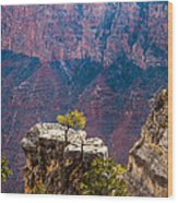 Lone Tree On Outcrop Grand Canyon Wood Print