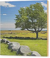 Lone Tree With Blue Sky In Blueberry Field Maine Wood Print