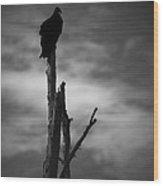 Lone Vulture Wood Print