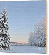 Lone Winter Spruce - Alaska Wood Print