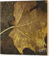 Lonely Autumn Leaf Wood Print