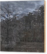 Lonely Bald Cypress Wood Print