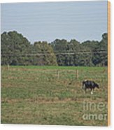 Lonely Cow Wood Print