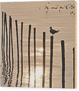 Lonely Gull Wood Print