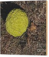 Lonely Hedge Apple Wood Print