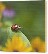 Lonely Ladybug Wood Print